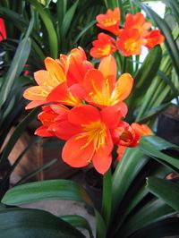 plante verte a fleur orange
