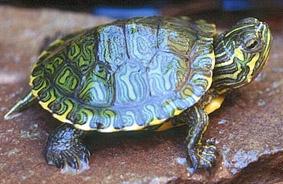A a allestire un acquaterrario per tartarughe d 39 acqua toluna for Filtro acqua tartarughe