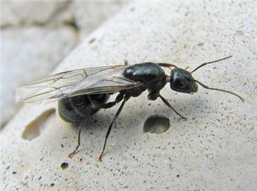Je suis envahie de fourmis volantes toluna for Fenetre volante