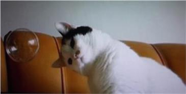 Katzenschläuche Östlicher Weite Pornos
