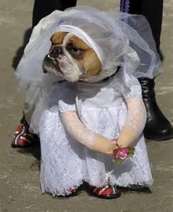 A volte si vedono in giro cani vestiti da umani. Cosa ne pensate?E' giusto  conciarli in quel modo? | Toluna