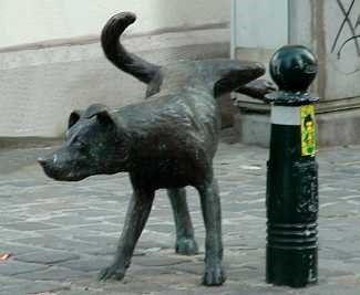 Image result for dog pee lamppost