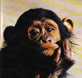 """Résultat de recherche d'images pour """"singe vexé"""""""