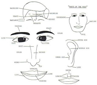 Face Reading - Personality Traits Revealed in Facial