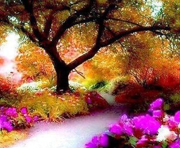 Dammi Odoroso All Alba Un Giardino Di Fiori Bellissimi Dove