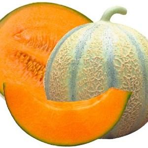 Quel melon le melon charentais jaune ou le melon charentais vert cultiv au maroc et en - Culture du melon charentais ...
