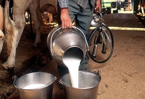 consumption of unpasteurized milk