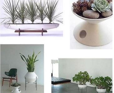 In casa le vostre piante stanno deperendo come le mie - Piante che purificano l aria in camera da letto ...