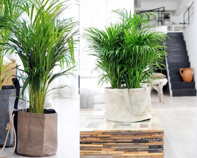 Ik ben er mee bekend dat veel kamerplanten niet alleen leuk staan in de woonkamer maar ook nog - Steun de plantes d interieur ...