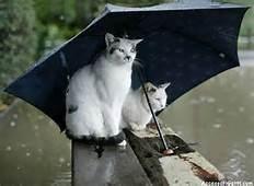 Buongiorno Con La Pioggia Toluna