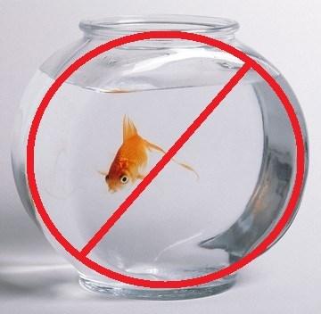 Saviez vous que le bocal poisson rouge a t interdit for Bocal en verre pour poisson rouge