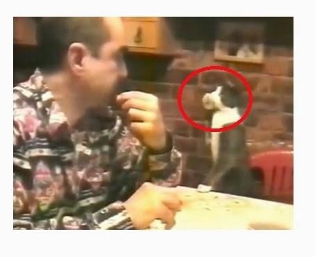 Ce chat malin utilise le langage des signes pour communiquer avec son maitre sourd ce sont - Chat qui dort sur son maitre ...