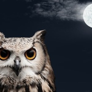 Morning person dating a night owl