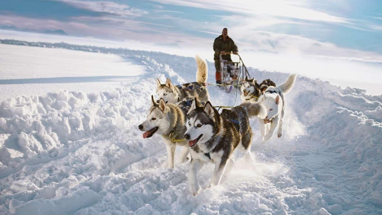 dog sledding - 1024×576
