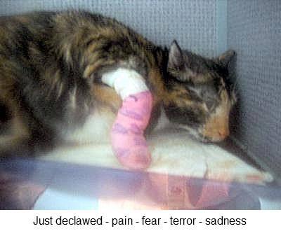cat cystitis treatment home