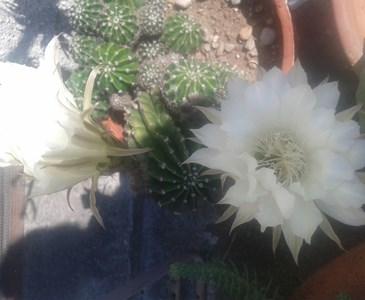 Fiori 24 Ore.Un Fiore Elegante E Semplice Che Dura 24 Ore Toluna