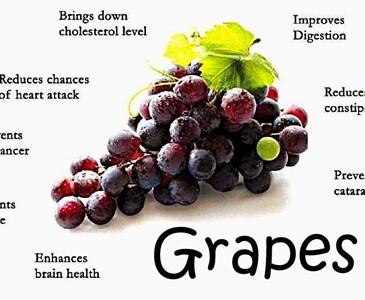 Khasiat Buah Anggur Toluna