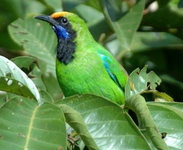 Binatanghewan Yang Ada Di Pohontanaman Berwarna Hijau