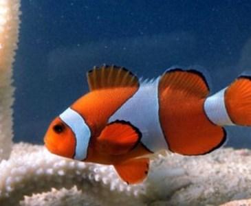 6400 Koleksi Gambar Hewan Yang Hidup Di Air Dan Di Darat Gratis Terbaik
