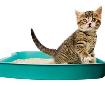 Why do cats bury their poop? | Toluna