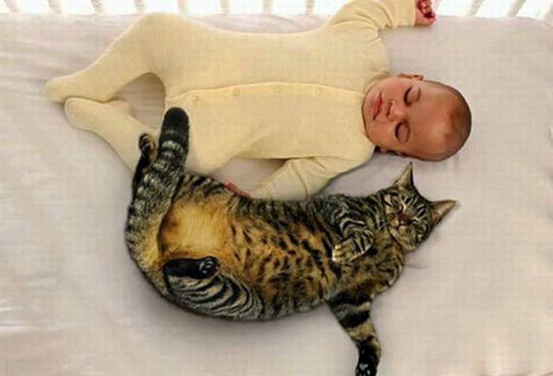 Грудные дети и кошки фото