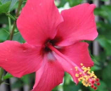 Unduh 55 Koleksi Gambar Gambar Bunga Sempurna HD Gratid