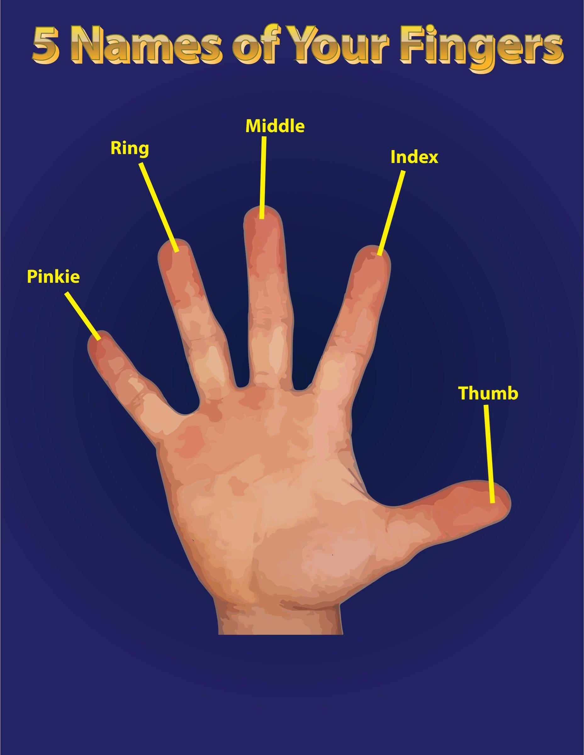 El Nombre De Nuestros Dedos En Ingles Toluna