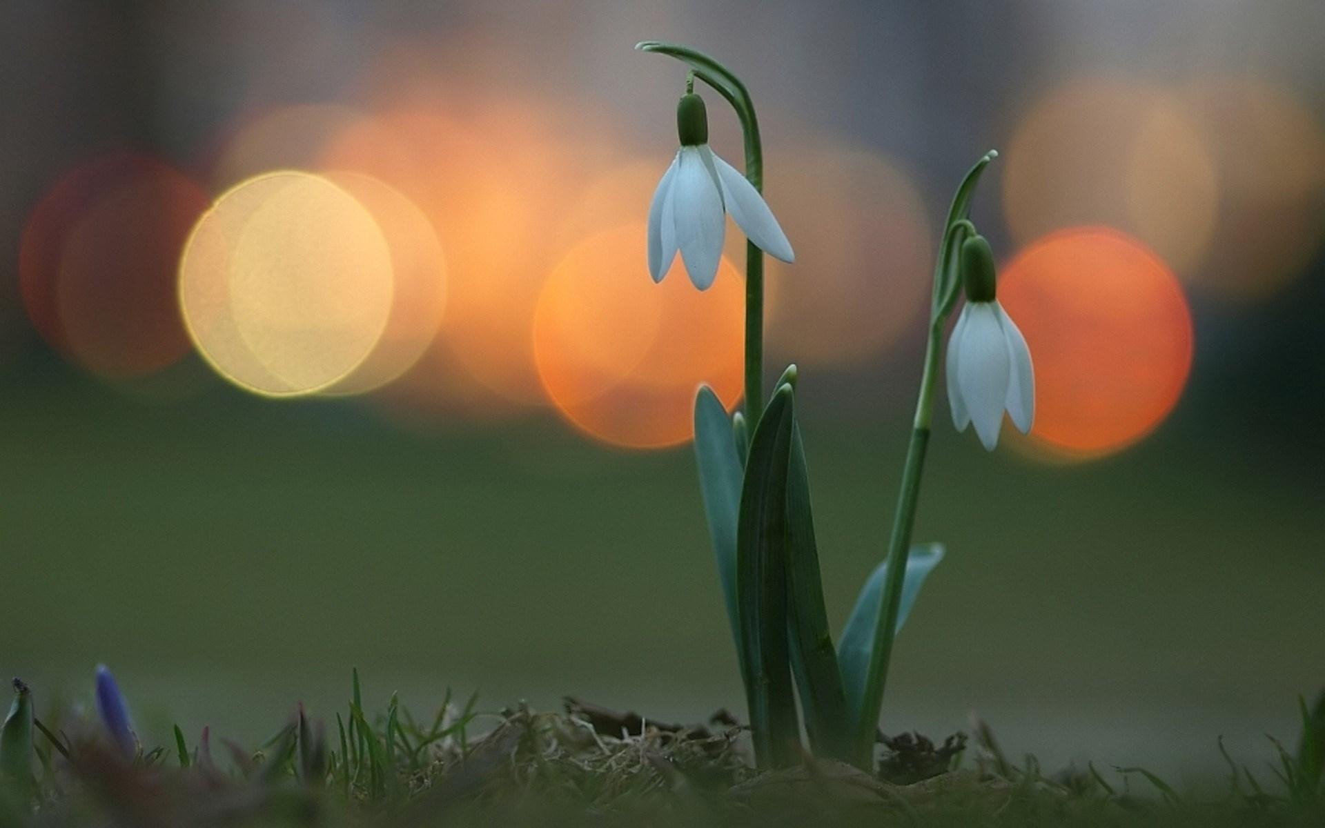 Подснежники Весна бесплатно