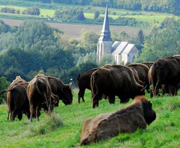 la vall e des bisons contribuera t elle faire de la normandie un nouveau far west toluna. Black Bedroom Furniture Sets. Home Design Ideas