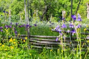 sju blommor under kudden
