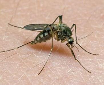 Was hilft am besten gegen Mücken im Schlafzimmer? | Toluna