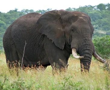 Apa Ya Warna Kulit Hewan Gajah Toluna
