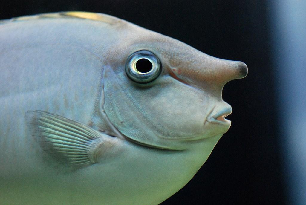 тюмени рыба с дурацким названием фото боли