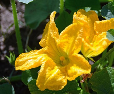 Flores Que Se Comen Toluna