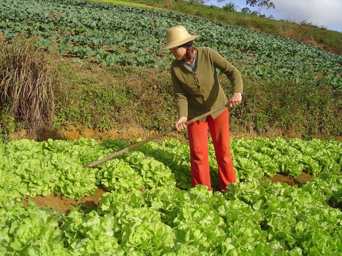 Fotos de granjas agricolas 47