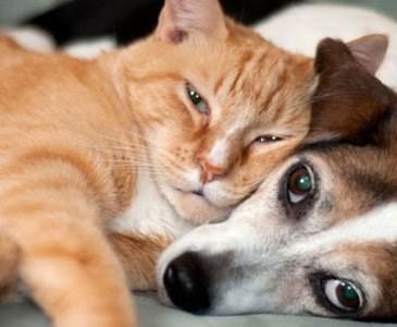 Cane E Gatto Cane E Gatto Chi Lha Detto Che Non Si Può Ma