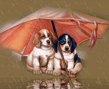 Buona Domenicacon La Pioggia Toluna