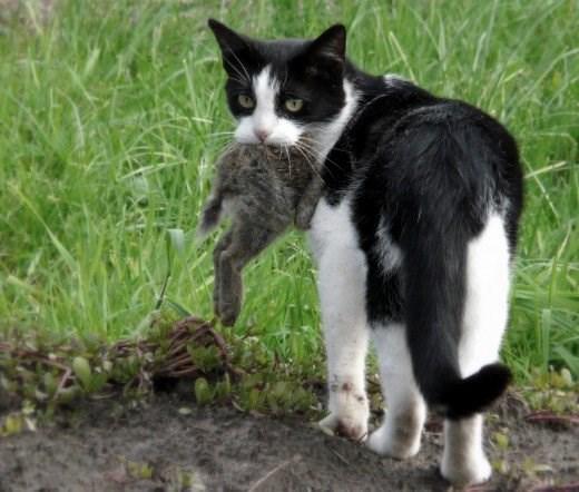 cat spray odor removal home remedy