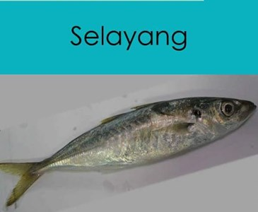 Selayang Ke Sardin Anda Panggil Ikan Apa Toluna
