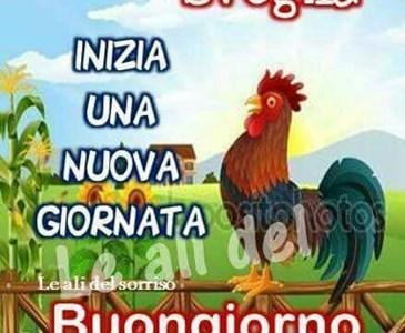 Buongiorno Community Toluna