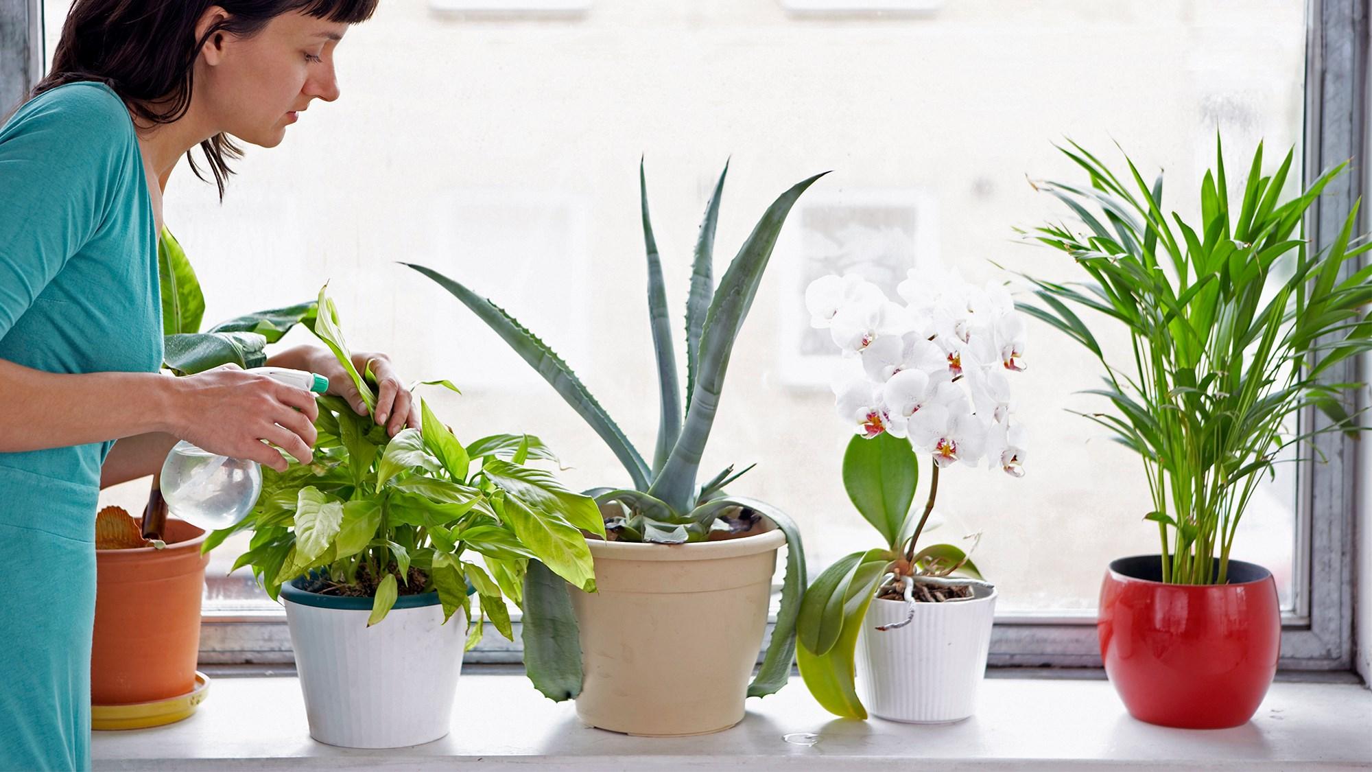 Комнатные цветы - выращивание и уход, каталог комнатных 74