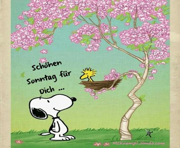 Guten Morgen Und Einen Schönen Sonntag An Alle Toluna