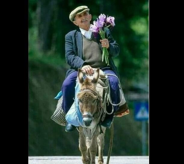 широкой картинка шуточная принц на коне восхищения отца