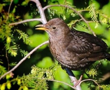 Jak Myśliszktóre Ptaki Jako Pierwsze Przylatują Do Polski Na Wiosnę