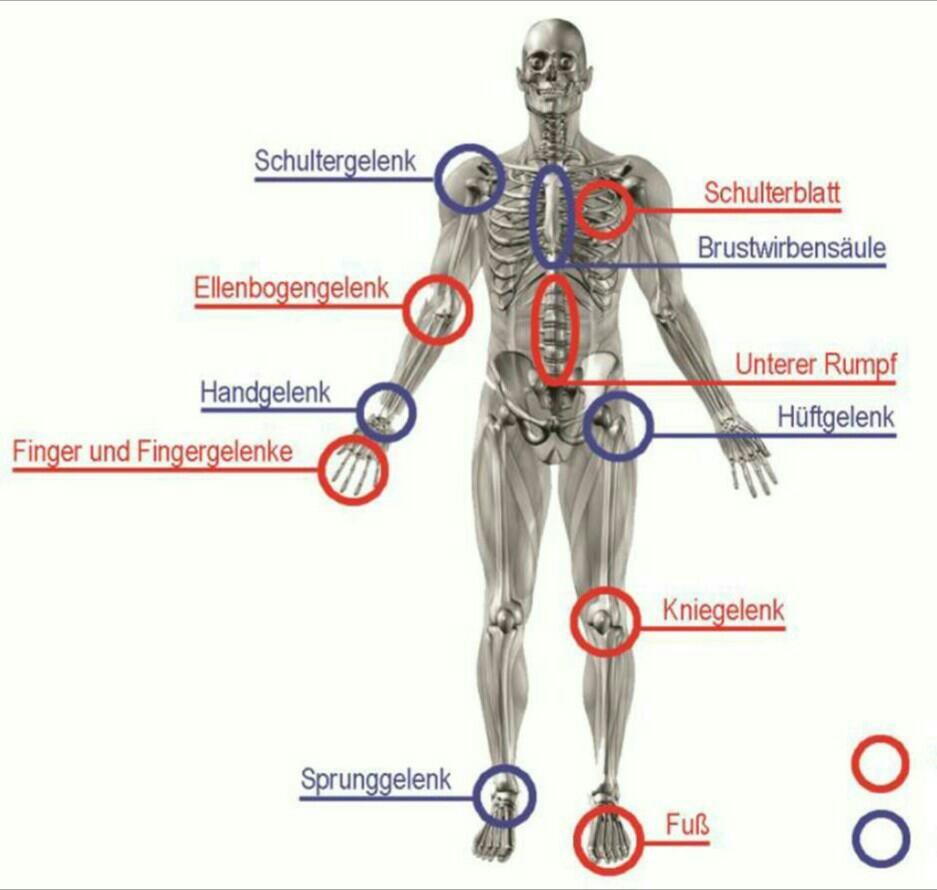 Wunderbar Schultergelenk Diagramm Fotos - Menschliche Anatomie ...