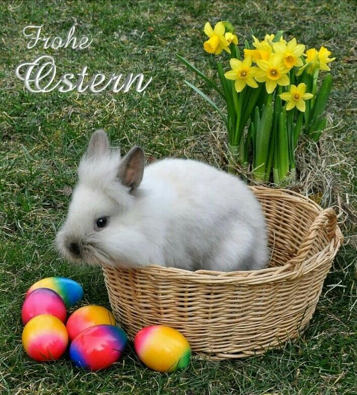 frohe ostern! - 768×779