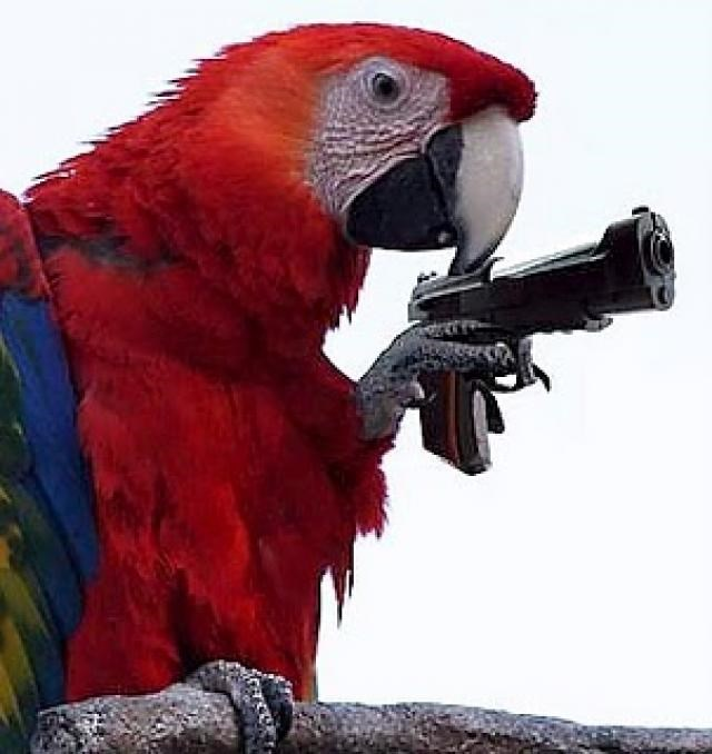 Открытка попугай с пистолетом