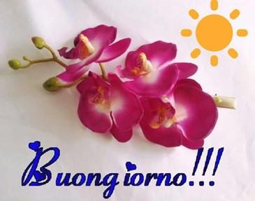 Buongiorno A Tutti Voi Toluna