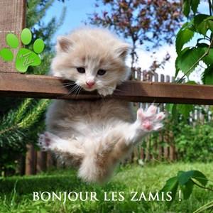 Bonjour Les Amis Je Vous Souhaite Un Bon Mardi Toluna