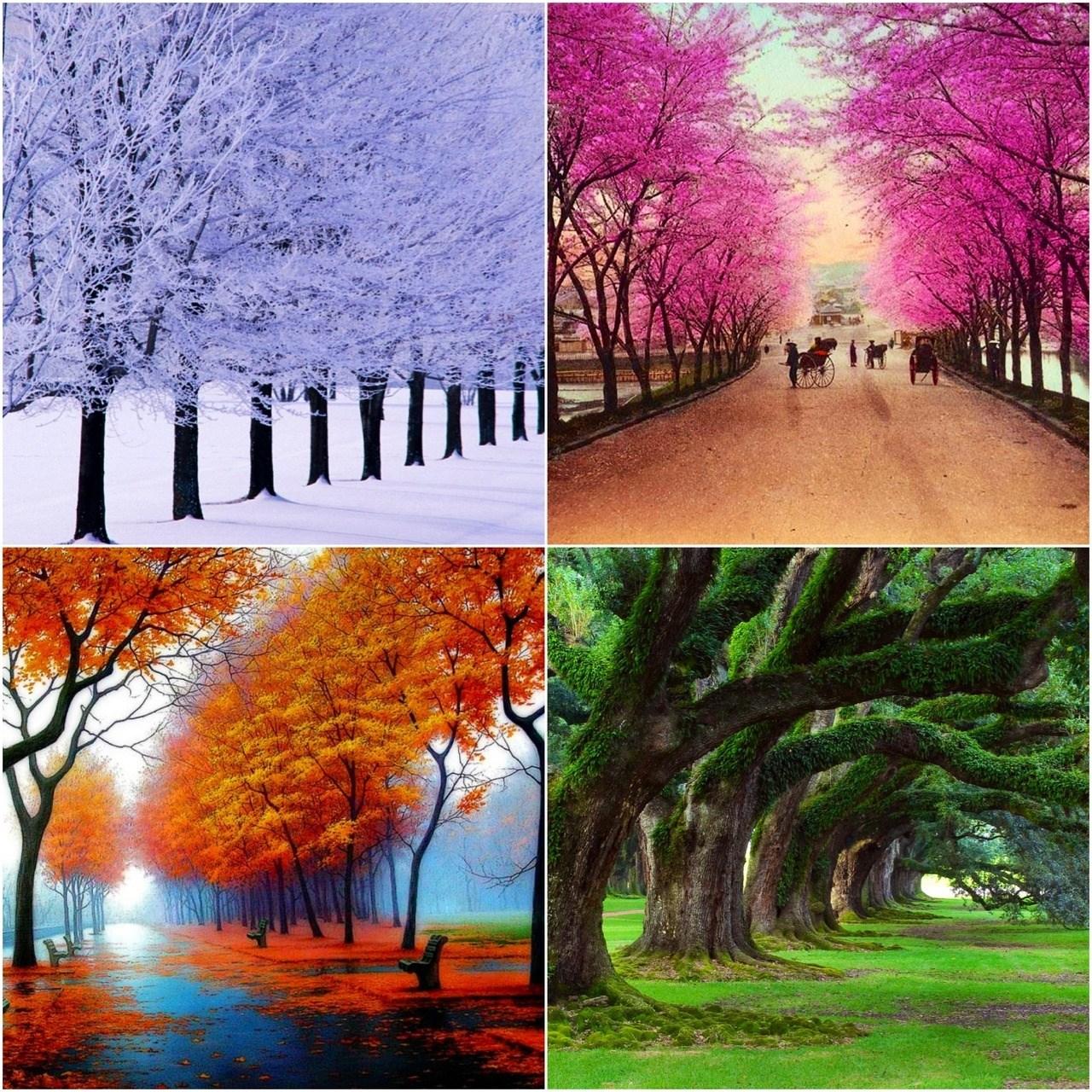 Днем, картинки осень зима весна